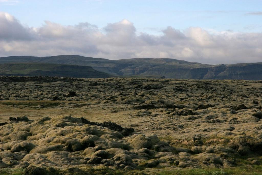Mousses et lichens colonisent naturellement les champs de laves.