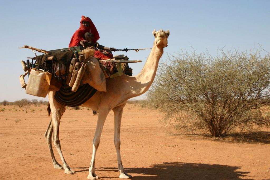 Les nomades Bisharin vivent en petits groupes isolés et se déplacent à dos de dromadaire.