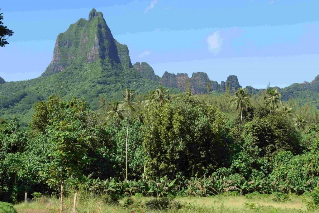 Le Mont Mouaroa est le troisième sommet de Moorea, culminant à 880 mètres d'altitude. Il est aussi connu sous le nom de Mont Bali Hai.