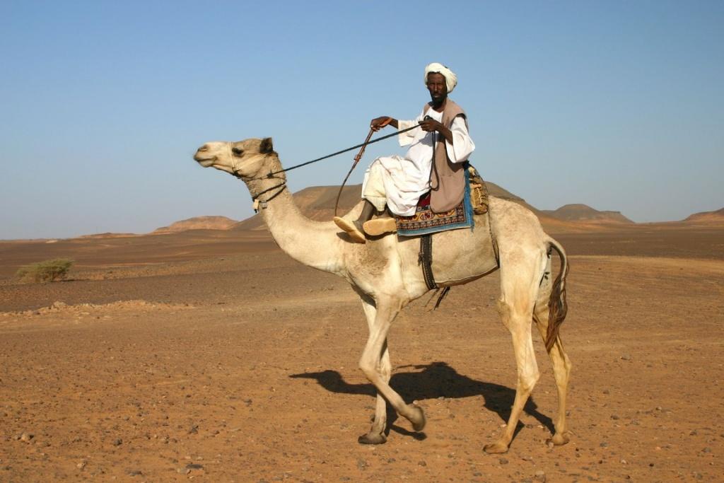 Un bédouin de cette fière et ancestrale tribu des Ababda trône sur son dromadaire.