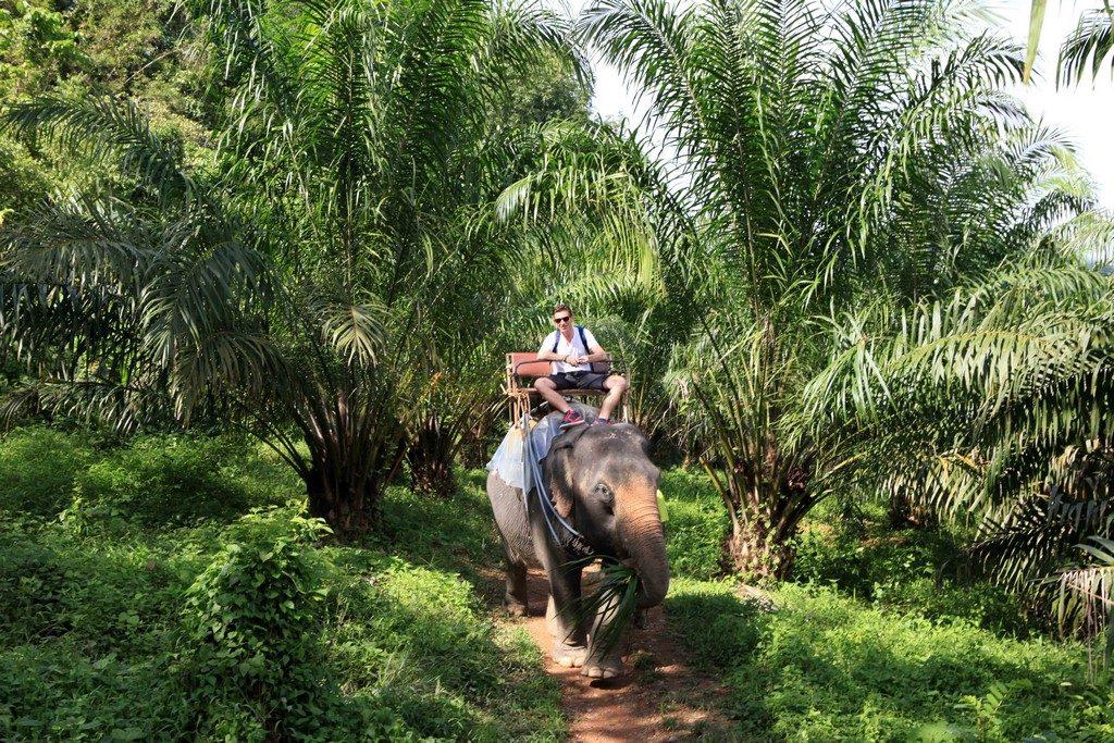 Promenade à dos d'éléphants dans la palmeraie de Khao Sok.