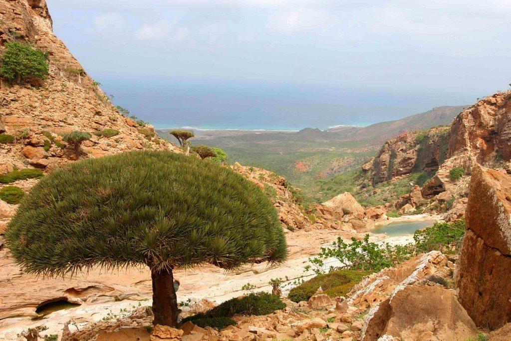 L'ombrelle d'une euphorbe se découpe sur le wadi shifa qui abrite une piscine naturelle.
