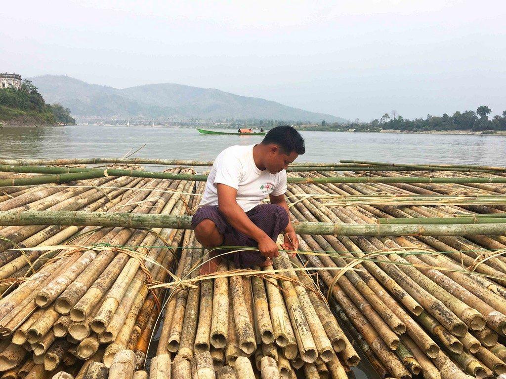 Les bambous sont assemblés en radeaux géants avant d'être convoyés par le fleuve.