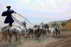 Les csikos sont les inventeurs de la célèbre poste hongroise : un cavalier conduit un attelage composé de six, voire dix chevaux, debout sur la croupe des deux derniers.