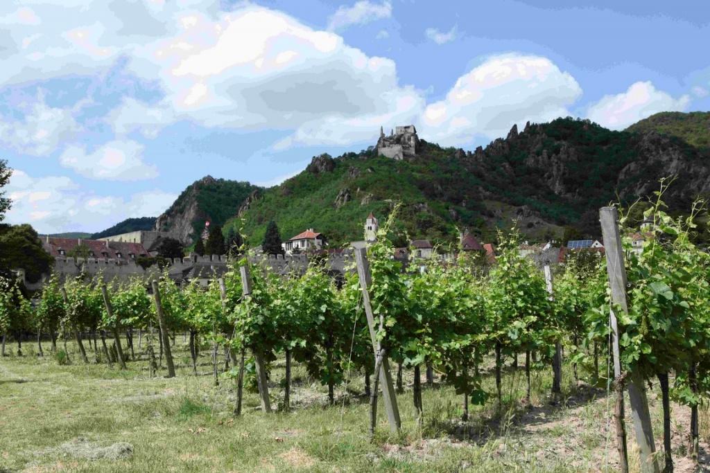 Vignoble et ruines de la forteresse de Dürnstein.