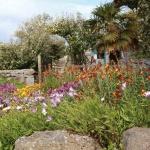 Chausey - fleurs