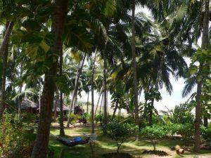 Bungalows et villas sont disséminés dans un superbe jardin tropical surplombant l'océan.