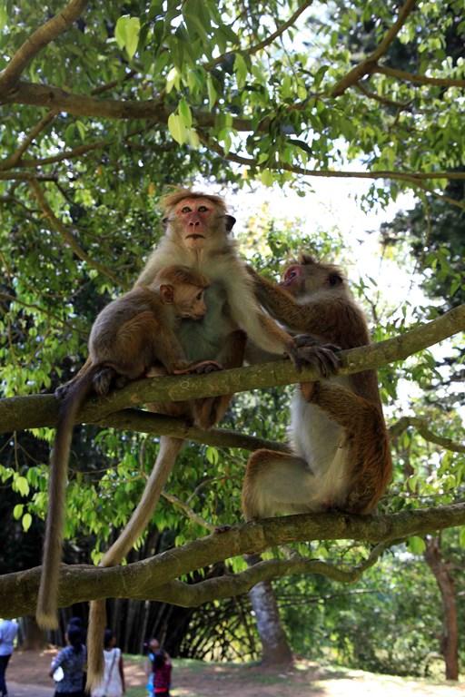 L'épouillage contribue à resserrer les liens entre les membres du groupe.