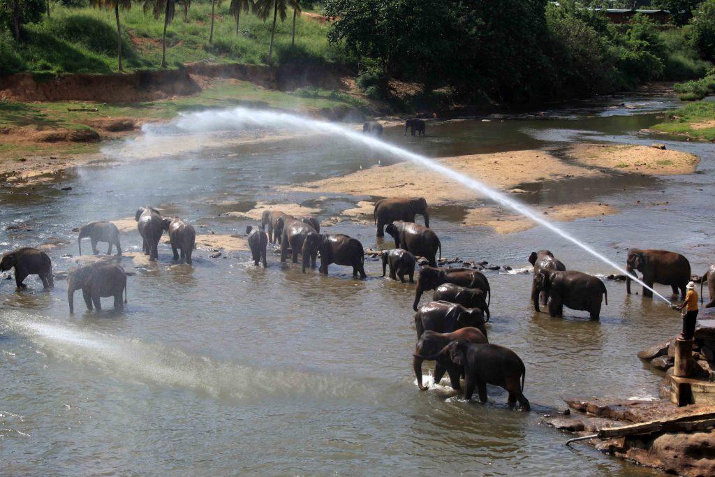 C'est l'heure de la douche! Toujours très appréciée des éléphants.