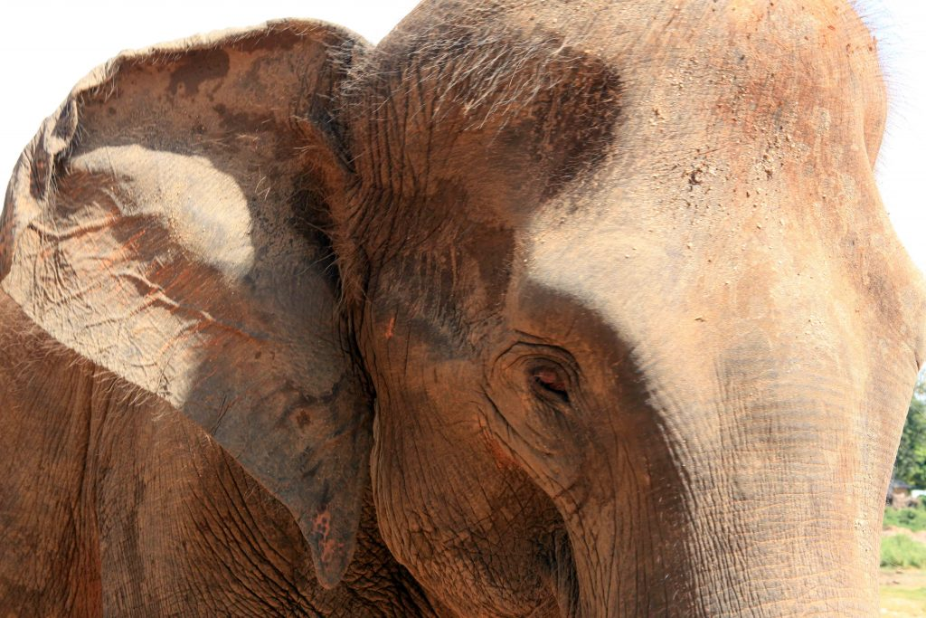 Ce jeune éléphant, enduit de terre ocre, s'est approché doucement de moi et m'a regardée dans les yeux. Sans ciller, sans peur aucune.