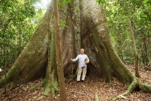 La randonnée nous fait découvrir d'immenses arbres vieux de 600 à plus de 1000 ans.