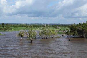 Nous sommes en début de période sèche, mais les eaux sont encore hautes. Cette année, il est tombé près de 8 m de pluies.