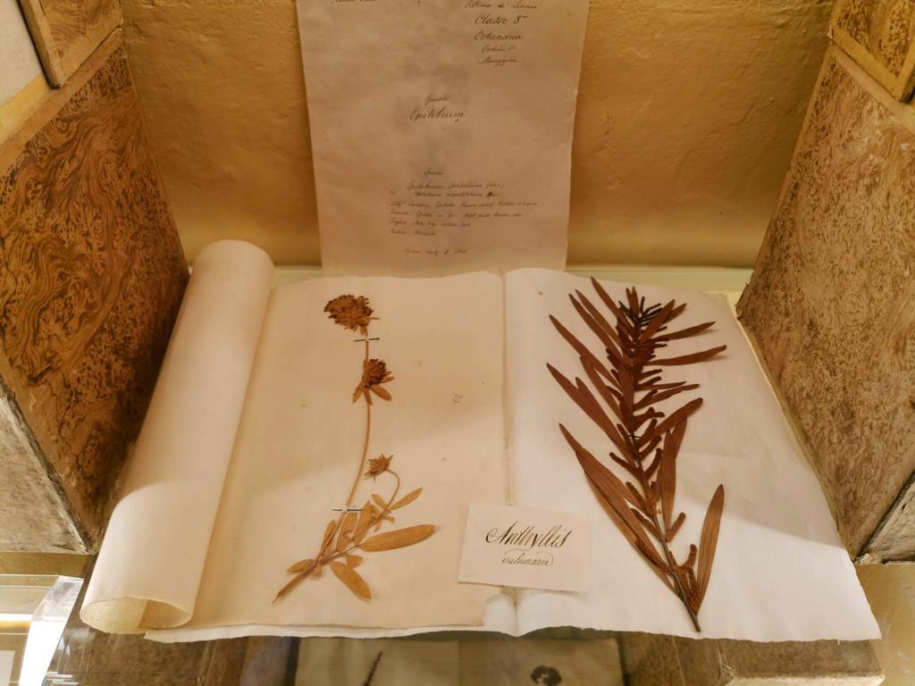 L'herbier va jouer un rôle majeur dans la diffusion des savoirs botaniques. Les premiers vrais herbiers ne datent que de la moitié du XVIe car, avant, le papier était rare et cher.