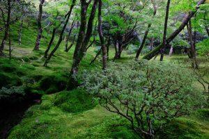 Les forêts verdoyantes de Kumano frôlent le surnaturel.