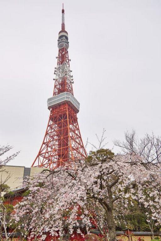 Tokyo tower, Shinjuku