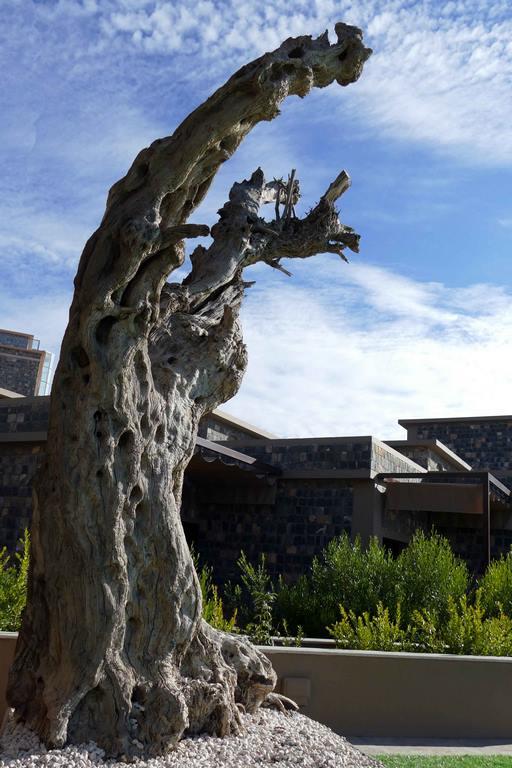 Dans le jardin, un vieux tronc d'olivier tend ses bras noueux vers le ciel.