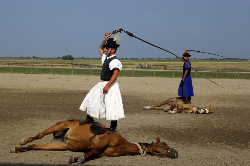 Les csikós utilisent un grand fouet qu'ils font claquer dans l'air au-dessus de leurs chevaux pour les faire travailler mais ils ne les frappent jamais avec.