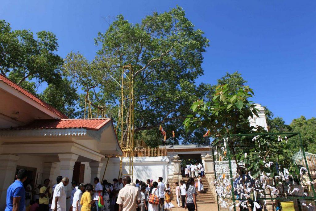 Sri Lanka. Anuradhapura - Sri Maha Bodi. Une pousse provenant de l'arbre sous lequel Bouddha reçut l'illumination fut ramenée d'Inde au IIIe siècle av. J.-C. par Sanghamitta. Elle fut plantée ici et donna l'arbre qui se tient devant vous. Cet arbre Bo (ou arbre de la Bodhi), le plus sacré de tous, est considéré comme le plus vieux du monde. Il est visité chaque jour par des centaines de pèlerins.