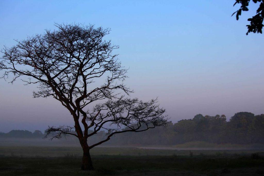 Sri Lanka. Ulagalla resort. Dans la brume au petit matin.