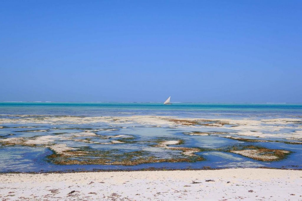 Zanzibar. Hôtel Zawadi. Comme très souvent à Zanzibar, l'eau se retire au-delà de la barrière de corail, dévoilant des étendues sableuses irisées de reflets bleu argent.