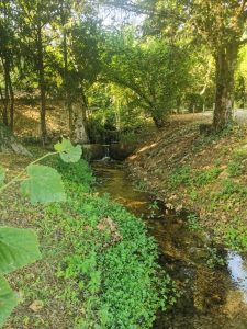 Carpentras. Château Martinay. Un ruisseau apporte une note de fraîcheur au sous-bois bordant un petit étang.