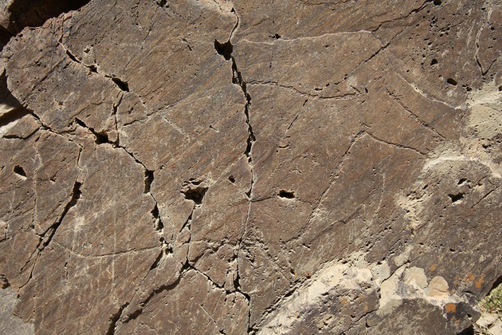 Portugal. Parc archéologique de la vallée du Côa. Le ventre des animaux est généralement exagéré par rapport aux membres qui sont souvent petits. Un style qualifié de « classique » dans l'ensemble de l'art paléolithique.