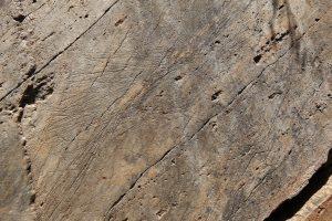 Portugal. Parc archéologique de la vallée du Côa. Tête de cheval représentée par incisions fines filiformes.