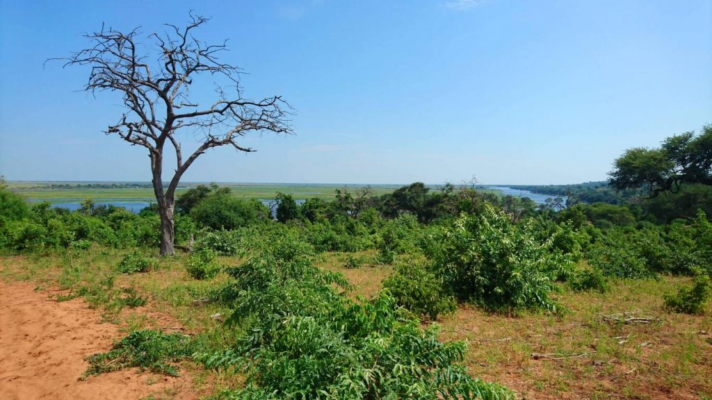 La rivière Chobé dessine une frontière naturelle entre le Botswana et la Namibie.