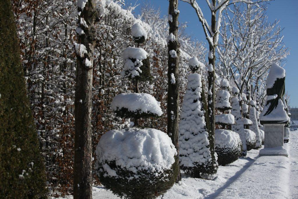 Château de Versailles. Charmilles et topiaires vêtues de neige.
