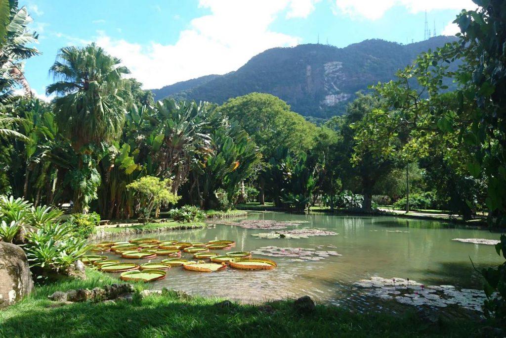 Brésil. Rio de Janeiro. Lac du Jardin Botanique.